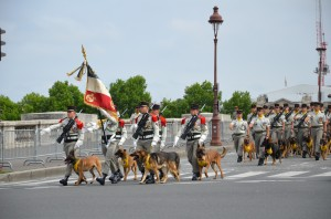 Dogs, some with medals.