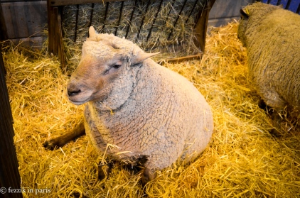 A relative of Fezzik, in sheep form.