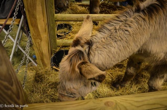 A friendly donkey.