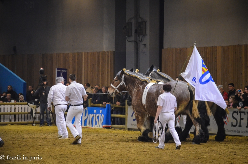 It took six guys to keep these massive horses (barely) under control.
