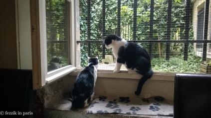 Deux chats.