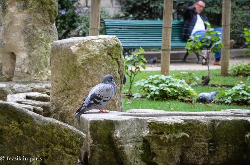 A pigeon in the garden adjacent to Saint-Germain-des-Prés.