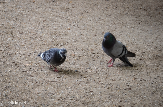 More amorous pigeons.