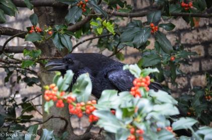 Perhaps unsurprisingly, we now own a plush raven.