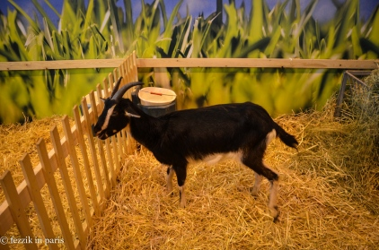 This goat has those stereotypical Dark Lord™ horns.