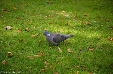 Just outside the palais: fat pigeons!